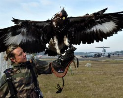 FRANCE-ARMY-DEFENCE-ANIMALS-2